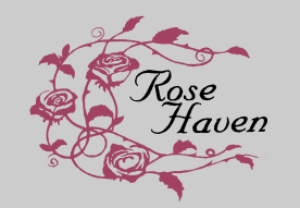 Volunteer Focus: Rose Haven